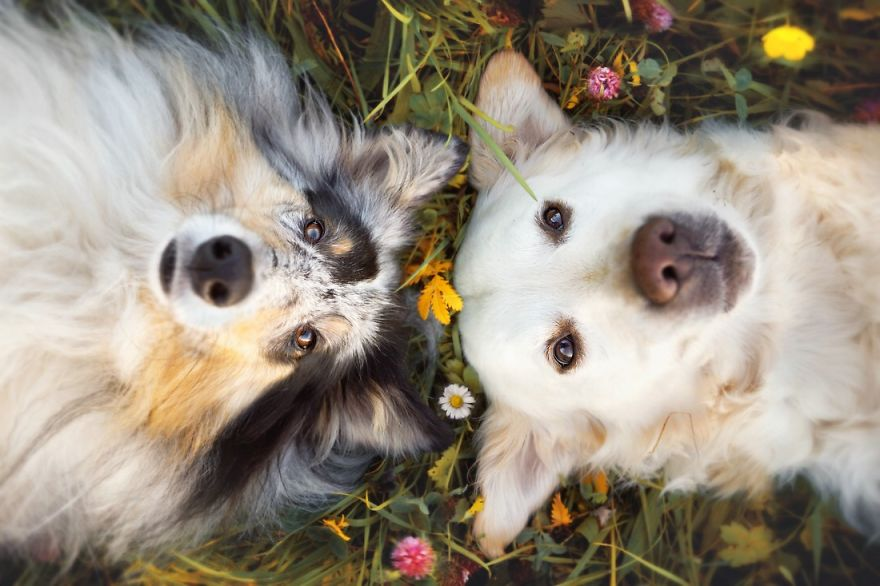 Shapello - tekući šampon za pse i mačke